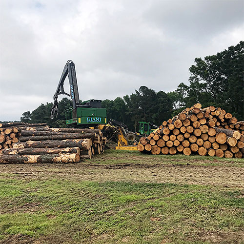 Raleigh, NC Forestry Services