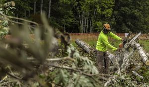 Land clearing in wake forest