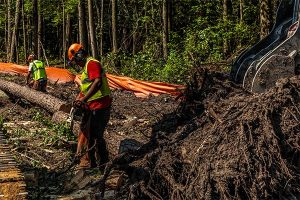 Forestry Clearing And Mulching